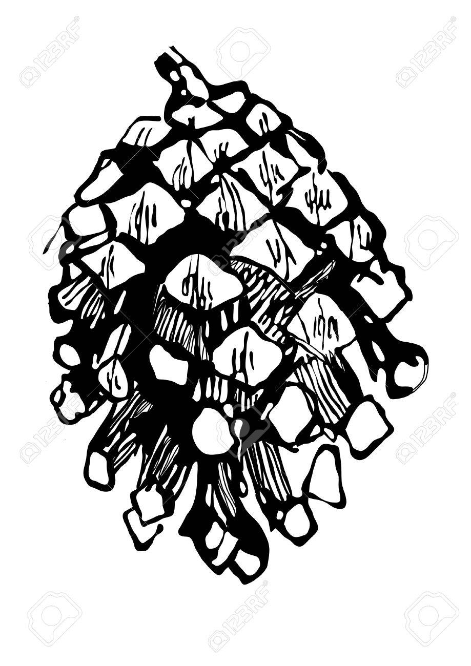 919x1300 Drawing Fir Cone (Pine,