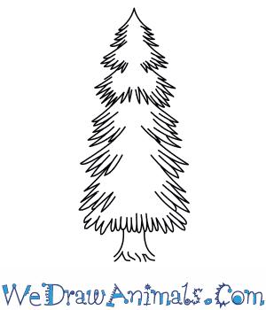 300x350 How To Draw A Spruce Tree