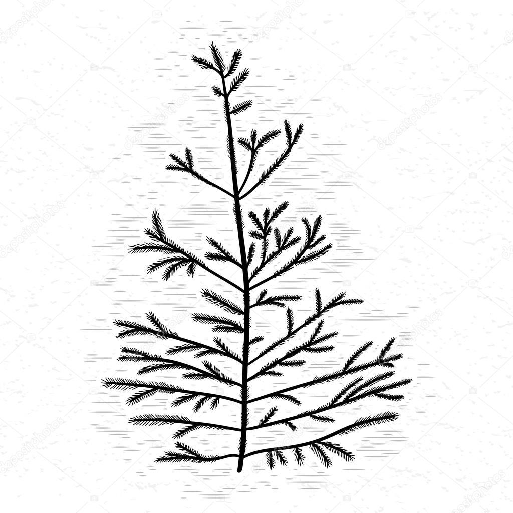 1024x1024 Silhouette Of Black Pine Tree Stock Vector Goldenshrimp