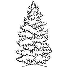 X Top Tree Coloring Pages For Your Little Ones