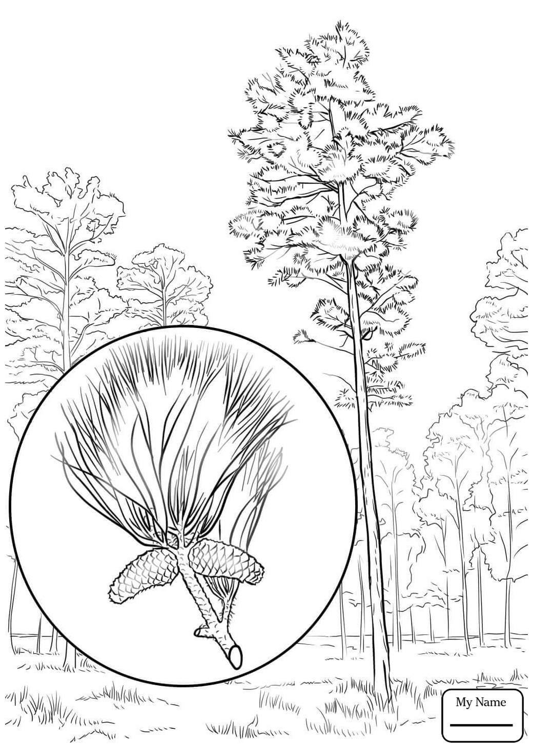 kids under pine trees coloring pages | Pine Tree Drawing at GetDrawings.com | Free for personal ...