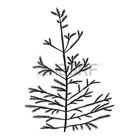 450x450 Vector Evergreen Silhouette Of Pine And Fir Tree, Conifer Tree