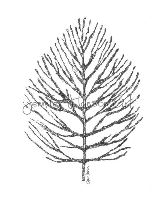 570x713 104 Best Darla Tree Images On Nature Tattoos, Pine