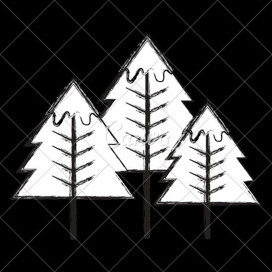 550x550 Pine Tree