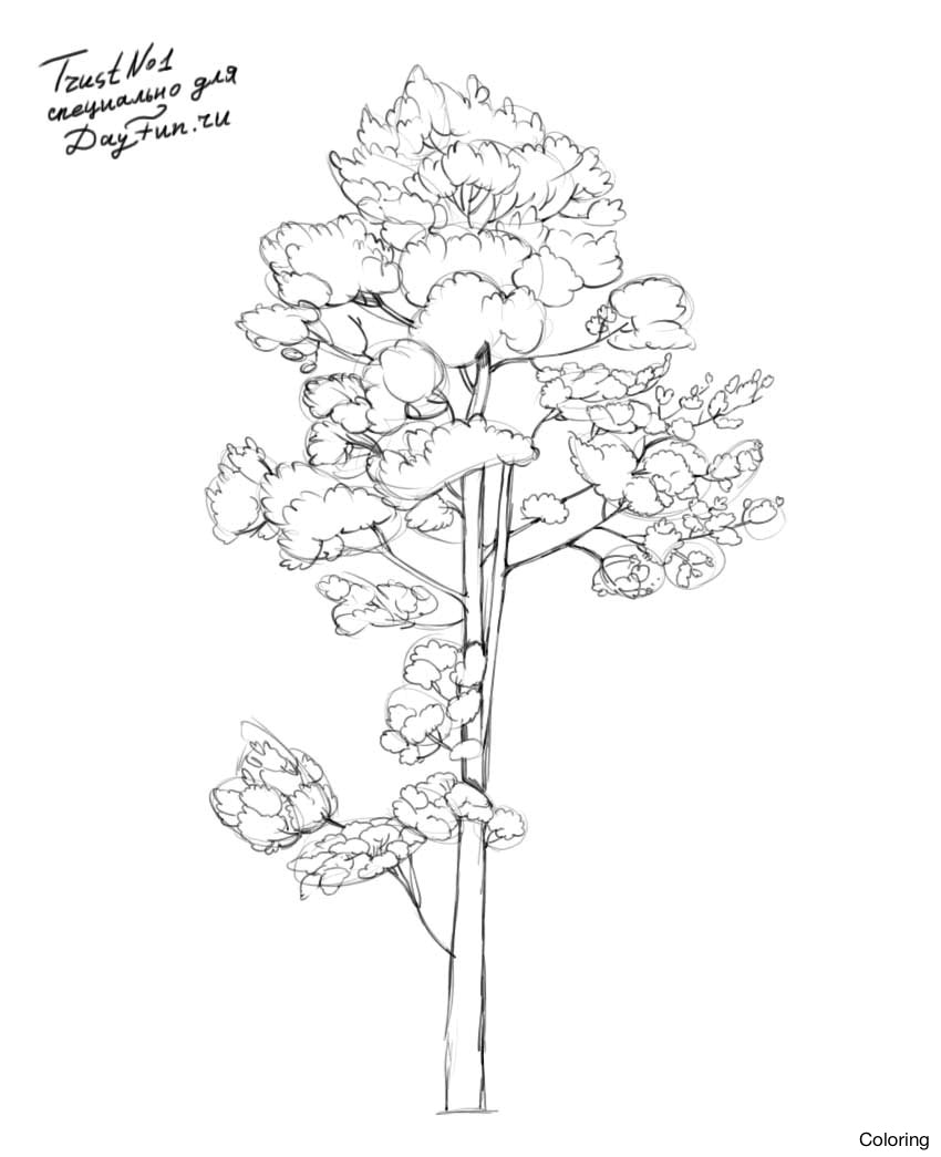 850x1045 Pine Tree Line Drawing Drawn Pencil And In Color Draw Coloring 12f
