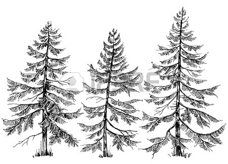 450x323 Pine Trees Collection. Hand Drawn Christmas Trees Royalty Free