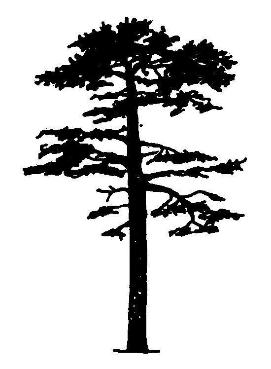 550x748 The Best Pine Tree Silhouette Ideas On Tree