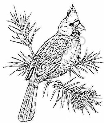 338x400 Cardinal In Trees