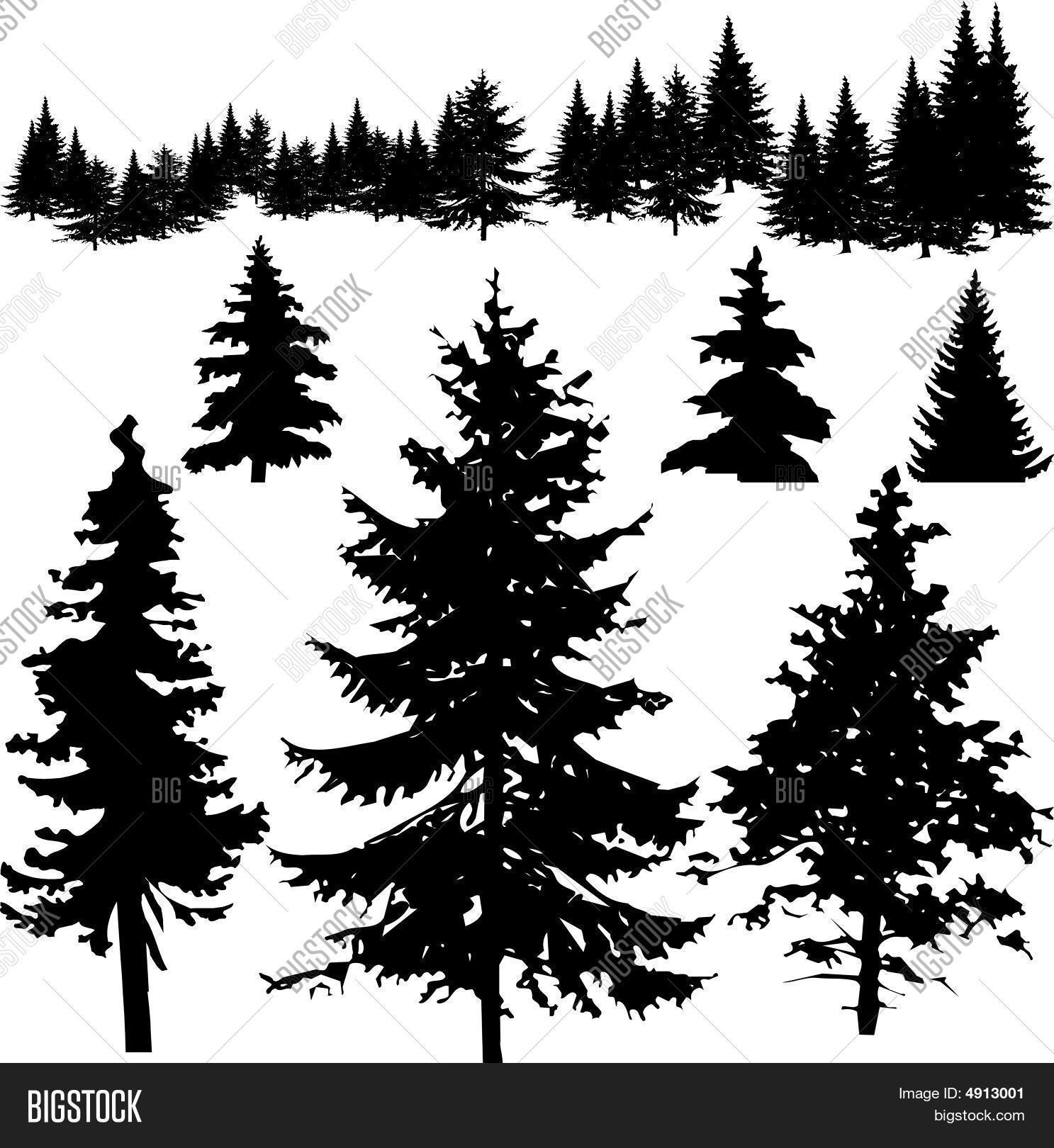 1487x1620 Detailed Vectoral Pine Tree Vector Amp Photo Bigstock