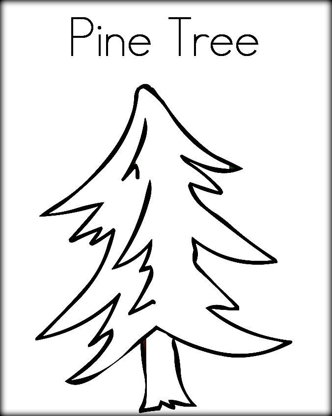 676x847 Drawn Pine Tree Child