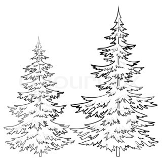 320x320 Drawings Of Old Pine Tree Christmas Trees Under Snow On A White