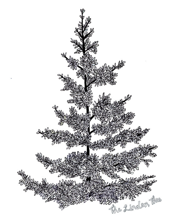570x713 Pine Tree Ink Drawing (Digital Print) By Thelindentree On Etsy