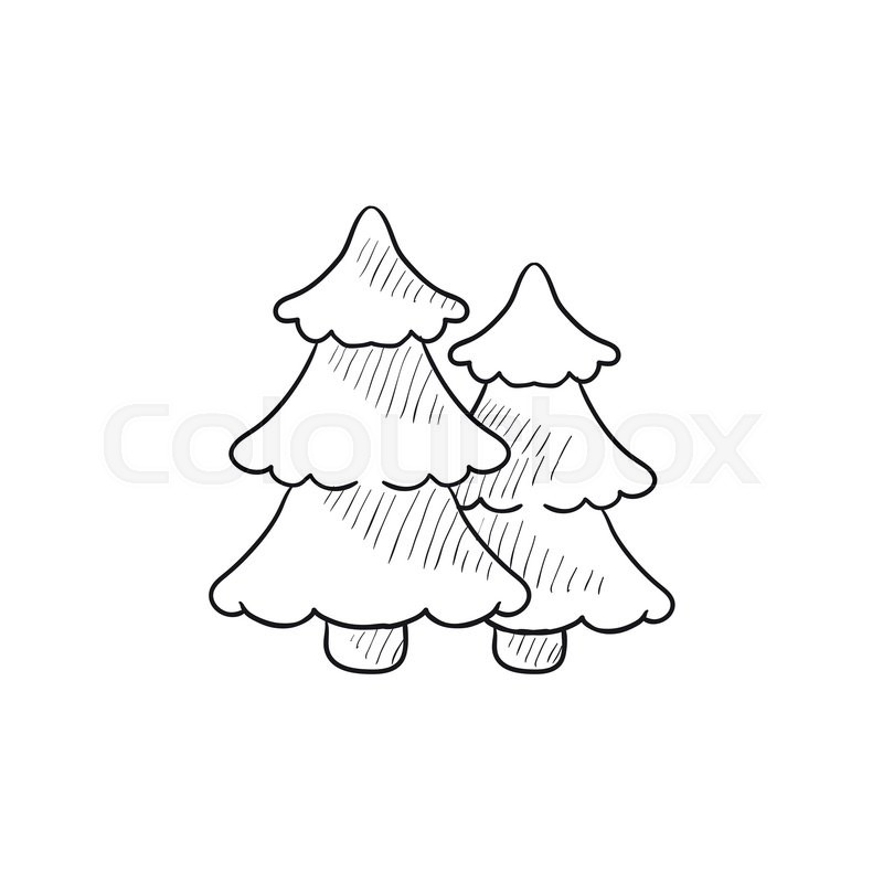 800x800 Pine Trees Vector Sketch Icon Isolated On Background. Hand Drawn