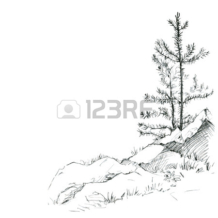 450x450 Young Pine Trees And Rocks Drawing By Pencil, Sketch Of Wild