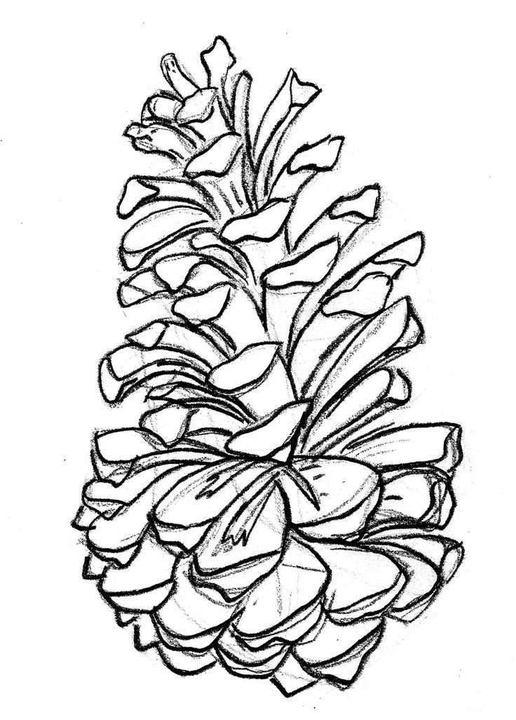 736x1026 Pine Tattoo On Pine Cones, Pine And Branches Go