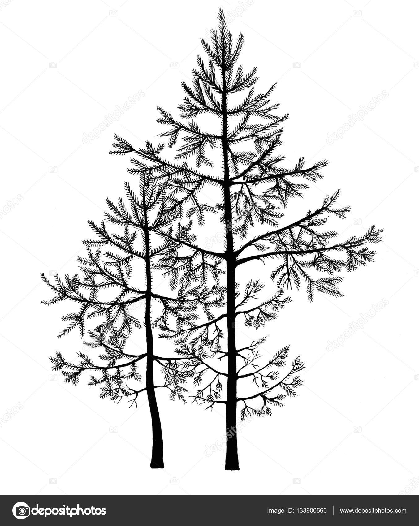 1354x1700 Black Pen Drawing Of Small Fir Trees In A Forest. Realistic Hand