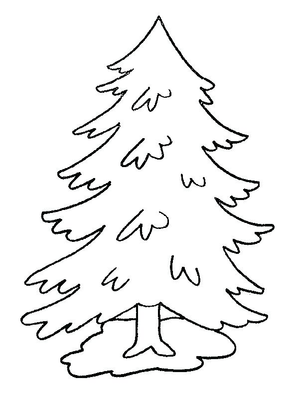 582x794 Coloring Pages Of Trees As Drawn Pine Tree Child 4 Free Printable