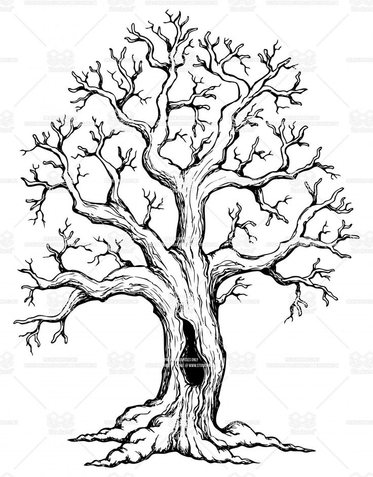 736x941 Black And White Tree Drawing