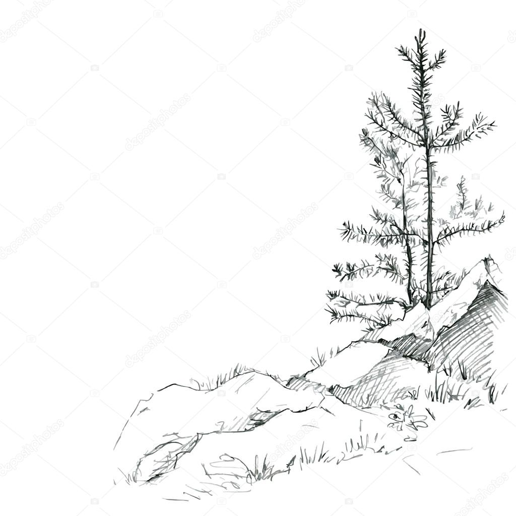 1024x1024 Pine Trees And Rocks Stock Vector Cat Arch Angel