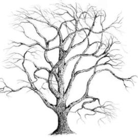270x270 Botanical Drawings Original Artwork For Sale