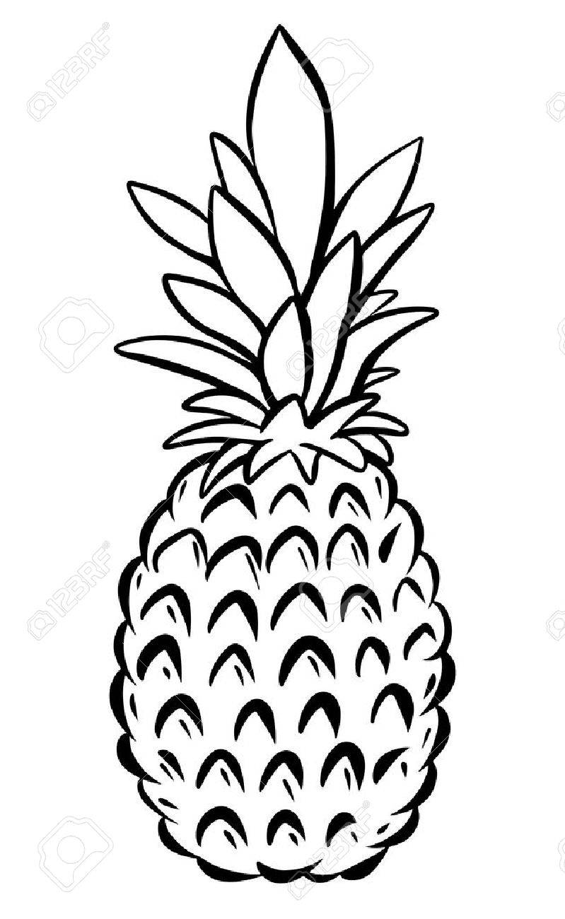Pineapple Drawing Clip Art at GetDrawings.com | Free for personal ... for Clipart Pineapple Black And White  587fsj