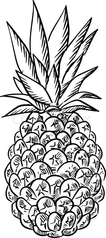 357x800 Sketch Of Ripe Juicy Tropical Pineapple Fruit With Fresh Leaves