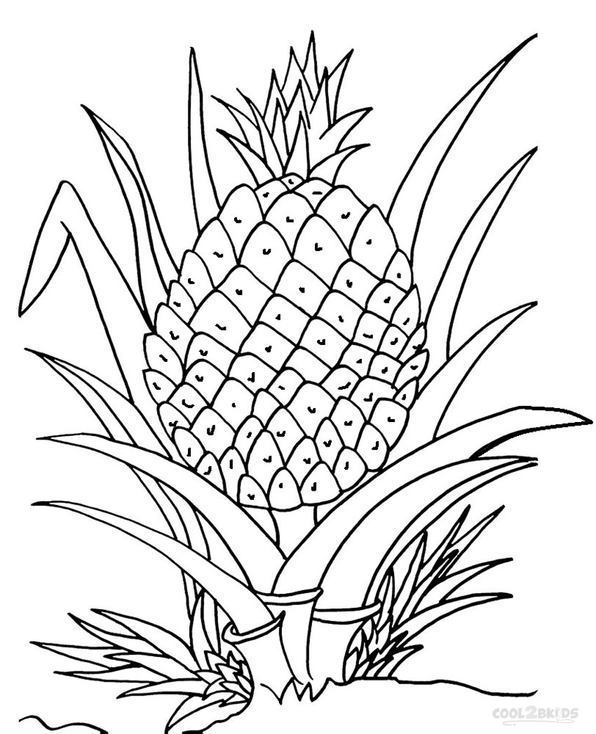 Pineapple Line Drawing at GetDrawings | Free download