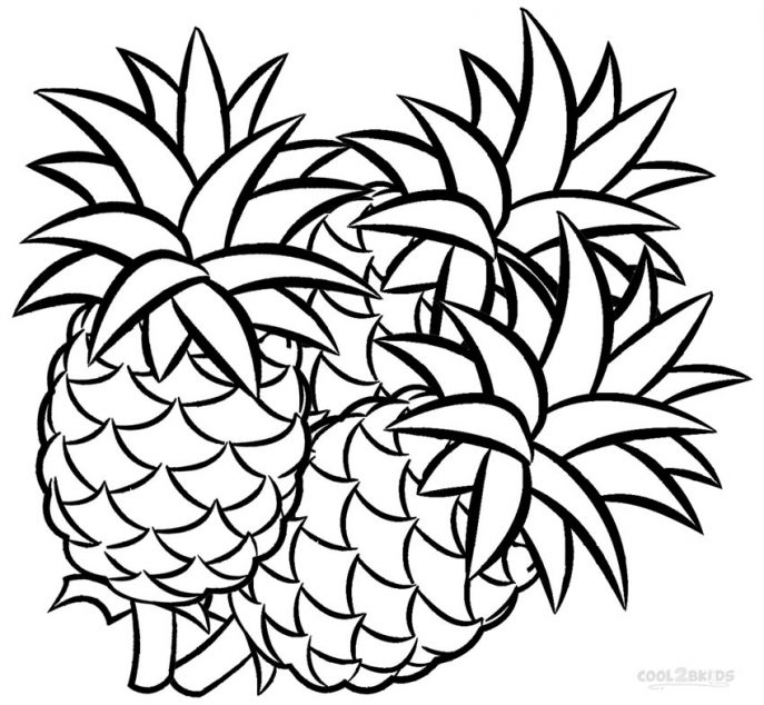 Pineapple Line Drawing at GetDrawings.com | Free for personal use ...