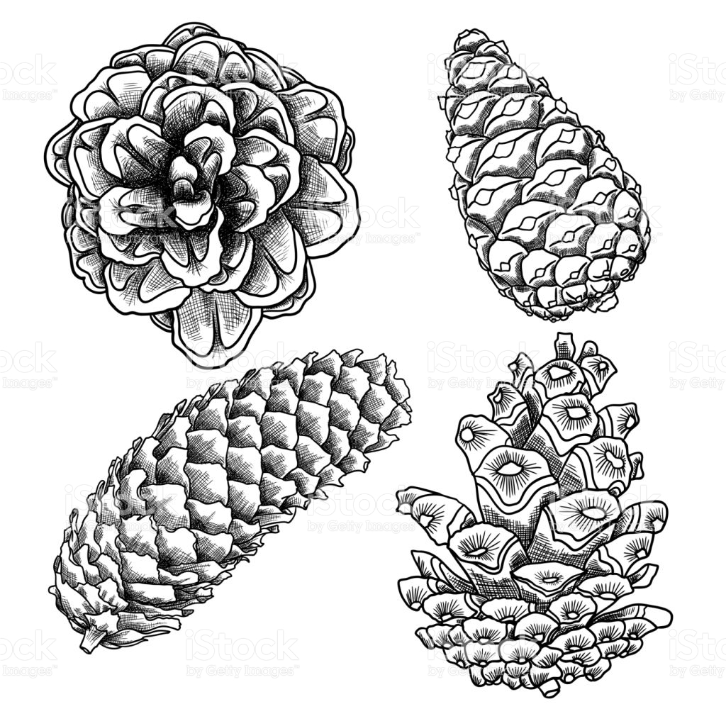 1024x1024 Pine Cone Coloring Page