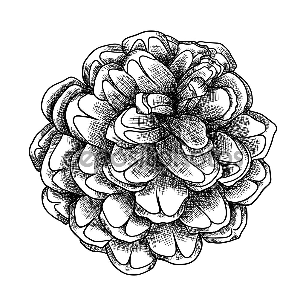 1024x1024 Drawn Pine Cone Line Texture