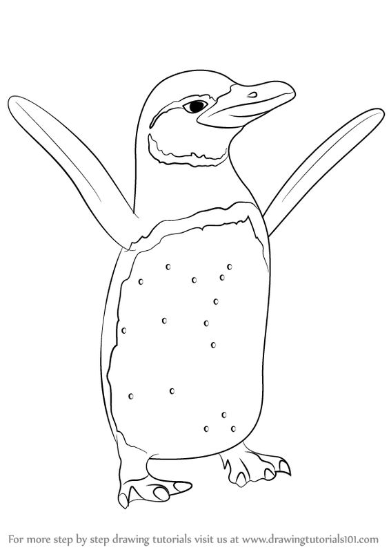564x796 How To Draw A King Penguin [Time Lapse] King Penguin Is The Second