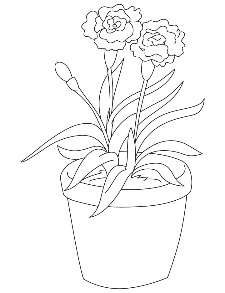 720x936 Light Red Carnation Coloring Page Download Free Light Red