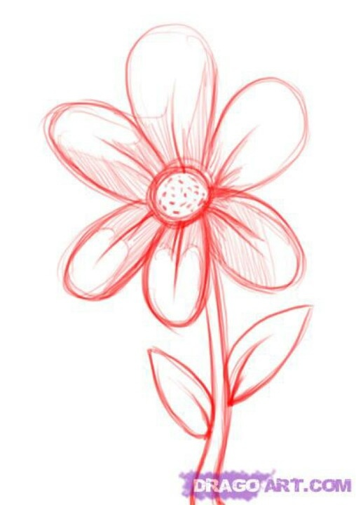 Pink Daisy Drawing