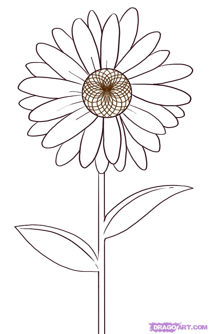 690x1101 Drawn Daisy Pencil Drawing