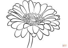 236x168 Gerbera Daisy Drawing