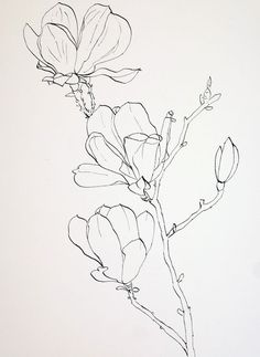 236x323 Pen Drawings Of Flowers Completed Ink Drawing Of Pink Magnolia