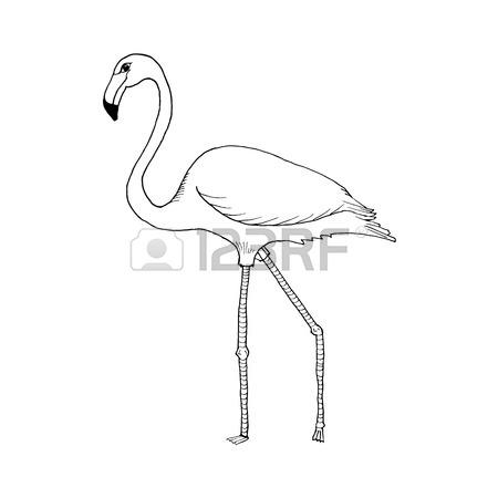 450x450 Flamingo Hand Draw Royalty Free Cliparts, Vectors, And Stock
