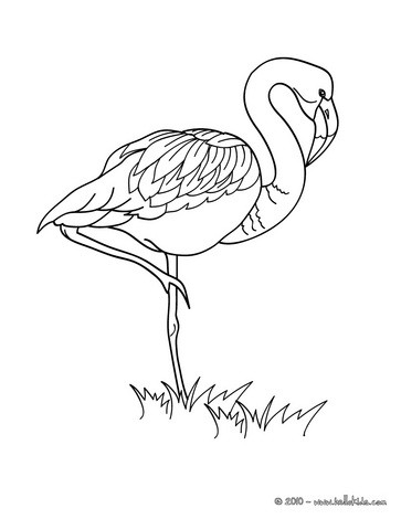 363x470 Flamingo Picture Coloring Page. Nice Bird Coloring Sheet. More