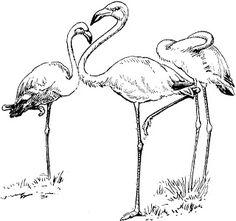 236x221 Flamingo. Vector Illustration, Elements For Design. Flamingo