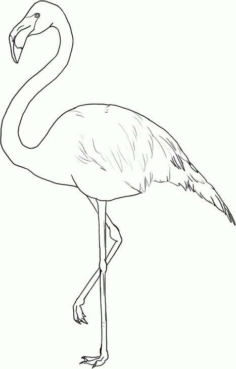 467x730 Free Flamingo Coloring Page Art Flamingo, Free