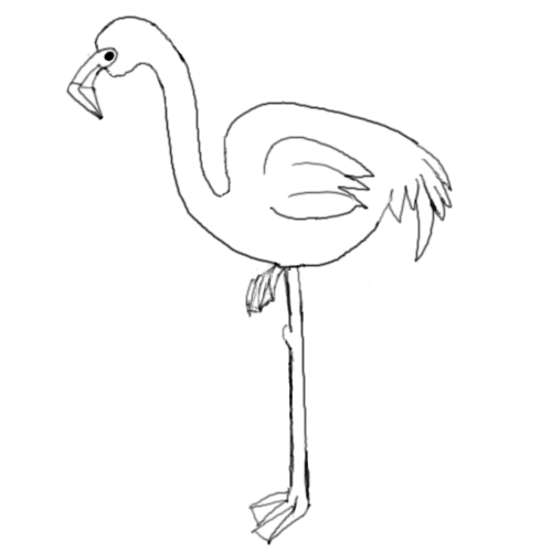 500x500 How To Draw A Pink Flamingo Save The Flamingos