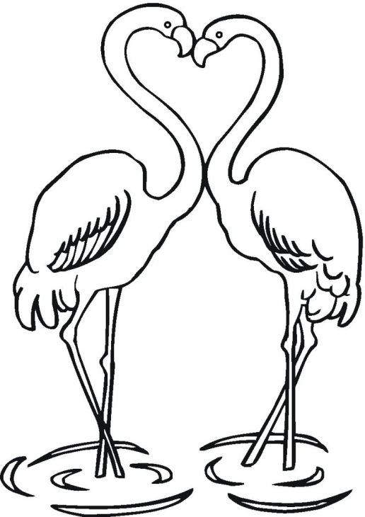 516x730 Two Flamingos In Love Coloring Page To Print For Kids Animal
