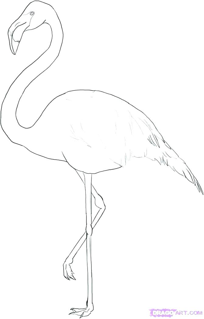 671x1047 Coloring Pages Of Flamingos Coloring Pages Pink Flamingo Coloring