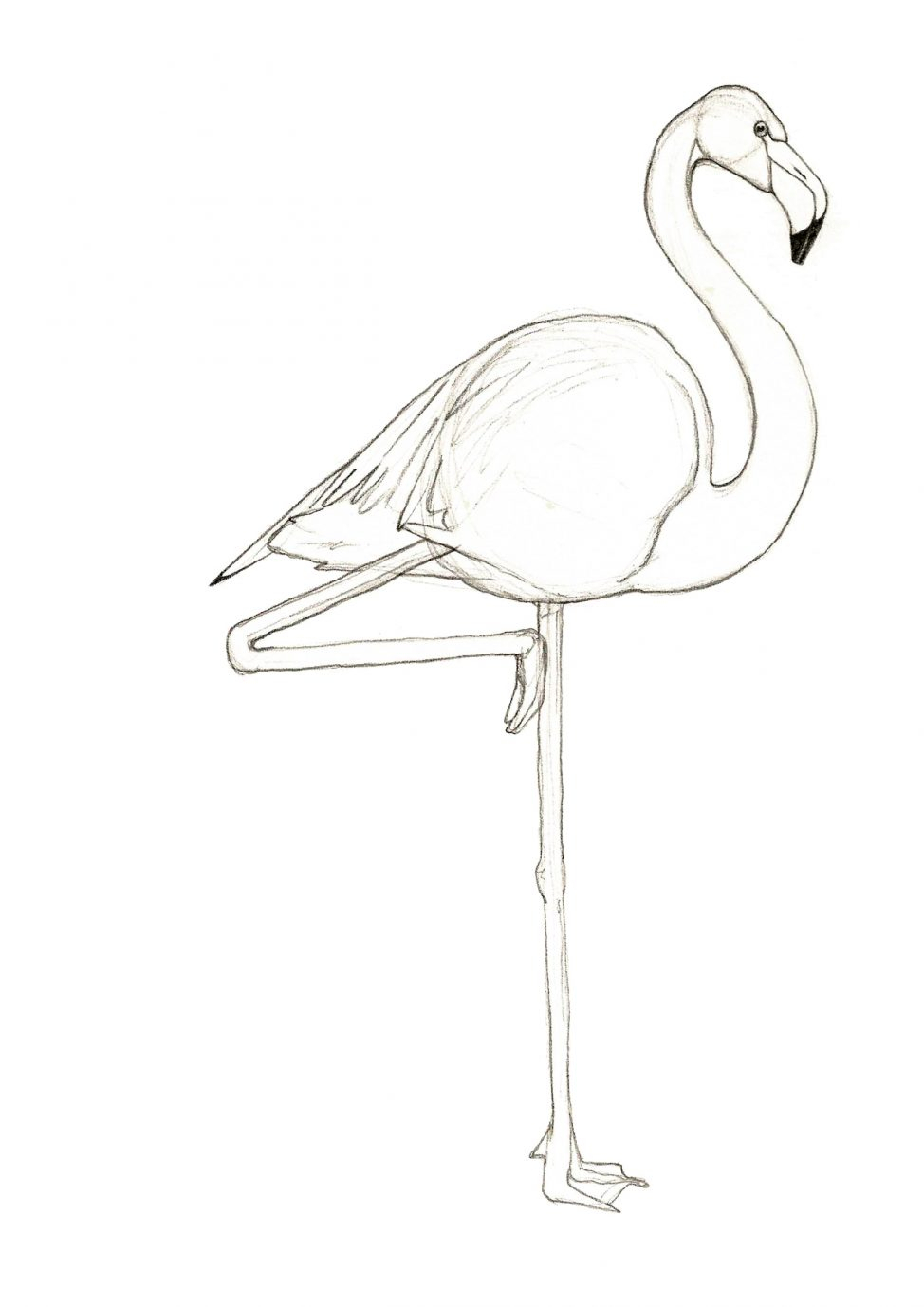 974x1378 Drawing Of A Flamingo Coloring Pages Amazing Drawing Of A Flamingo