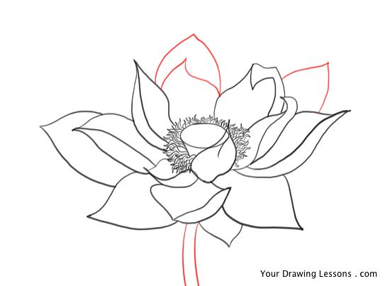550x403 How To Draw A Lotus Flower Your Drawing Lessons