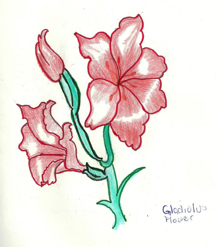 900x1026 A Gladiolus Flower Red By Starshorizon