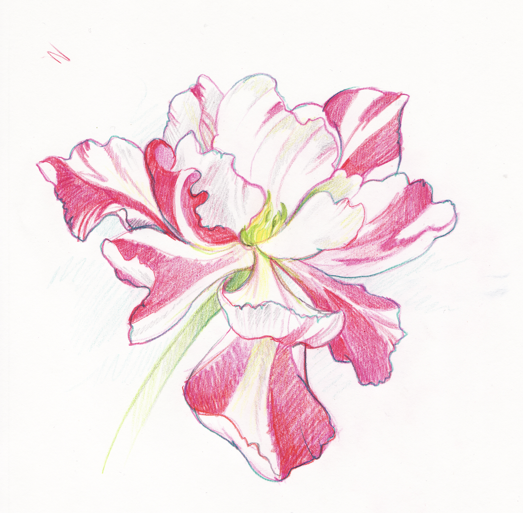 Pink flower drawing at getdrawings free for personal use pink 1772x1739 flower debbie bellaby illustration mightylinksfo