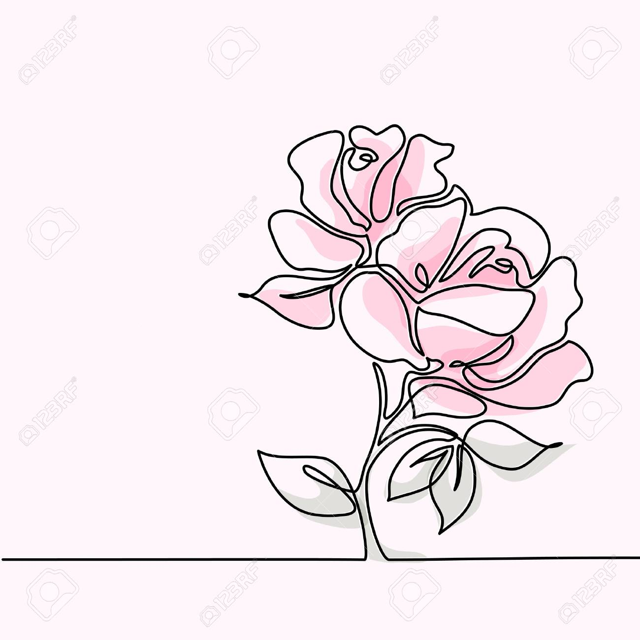 1300x1300 Beautiful Soft Color Pink Rose Flowers. Continuous Line Drawing