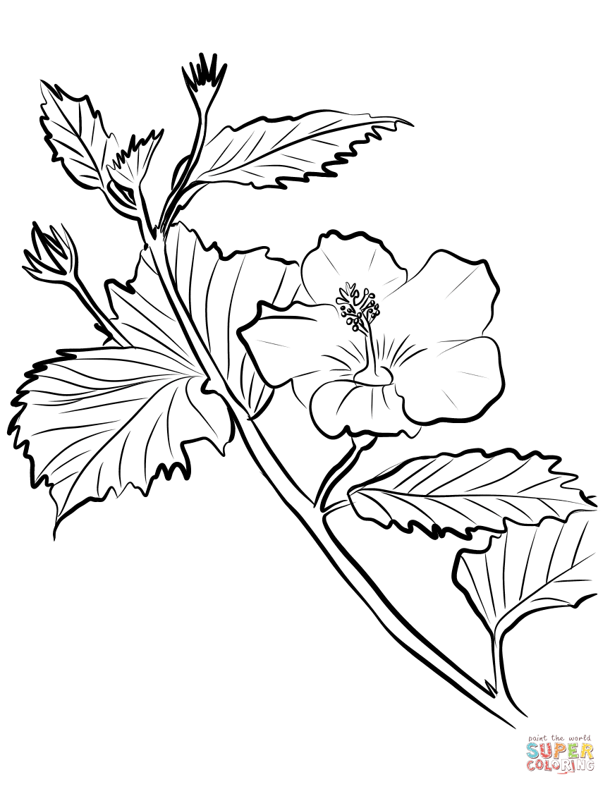 865x1119 Hibiscus Coloring Pages Flower Free Coloring Book Picture