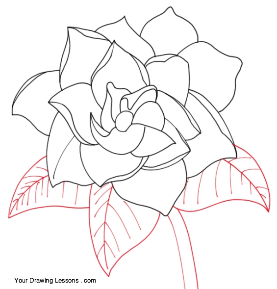 565x589 How To Draw A Gardenia Your Drawing Lessons